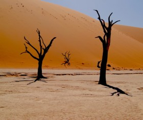 Dried leafless trees on desert Stock Photo