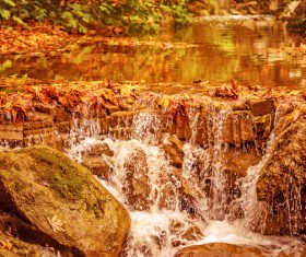 Fallen leaves in the river Stock Photo
