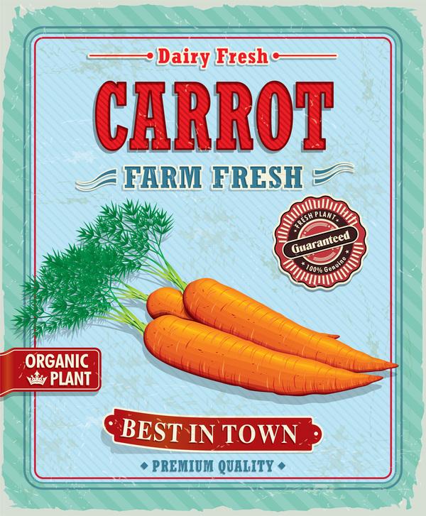 Fresh carrot poster vector