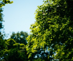 Fresh green trees under sunlight Stock Photo
