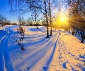 Glaring sunshine and beautiful winter snow scene Stock Photo 01