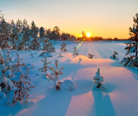Glaring sunshine and beautiful winter snow scene Stock Photo 02