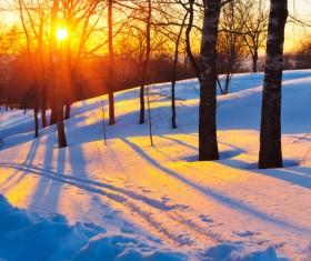 Glaring sunshine and beautiful winter snow scene Stock Photo 03
