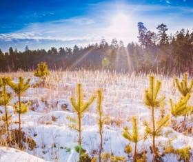Glaring sunshine and beautiful winter snow scene Stock Photo 05
