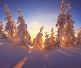 Glaring sunshine and beautiful winter snow scene Stock Photo 06