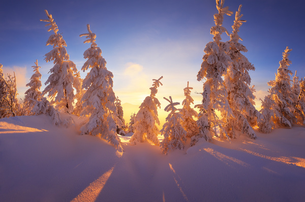 Glaring sunshine and beautiful winter snow scene Stock Photo 06