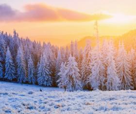 Glaring sunshine and beautiful winter snow scene Stock Photo 07