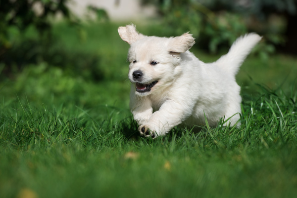 Happy dog on the grass Stock Photo