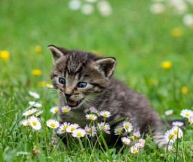 Kitten call out Stock Photo