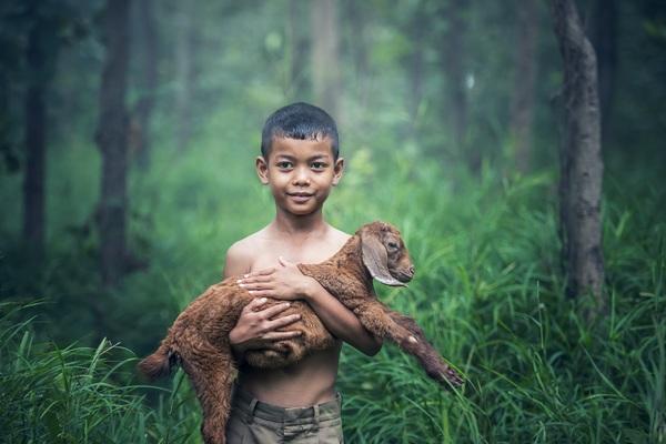 Little boy holding lamb Stock Photo