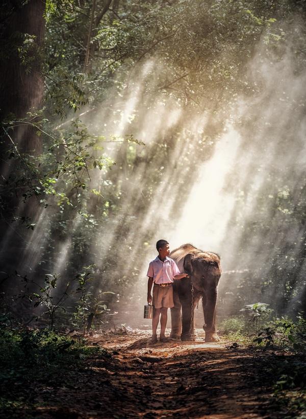 Little boy holding young elephant Stock Photo