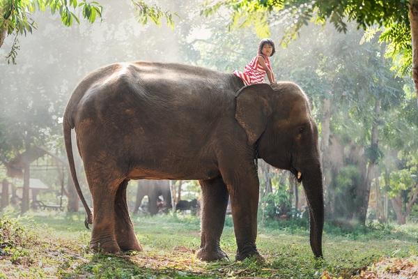 Little girl riding elephant Stock Photo