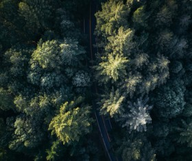 Luxuriant green trees from high view Stock Photo