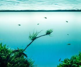 Marine wildlife under clear water Stock Photo