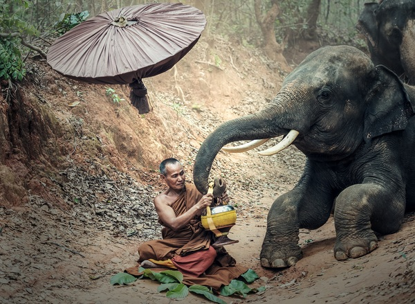 Monks and elephants Stock Photo