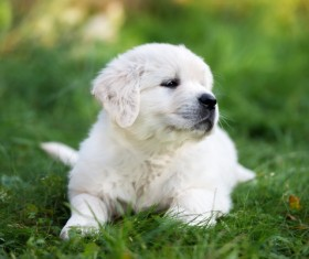 Puppy lying on the grass Stock Photo
