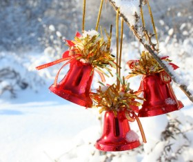 Red bells on the branch Stock Photo
