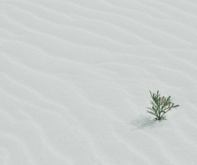 Tiny growing plant on deser Stock Photo