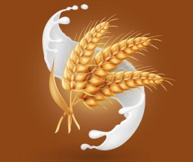 Wheat with milk splash vector