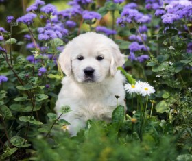 White dog in the flowers Stock Photo 01