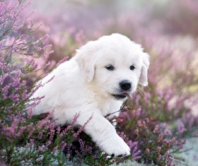 White dog in the flowers Stock Photo 03