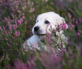 White dog in the flowers Stock Photo 04