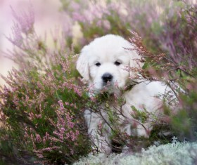 White dog in the flowers Stock Photo 05
