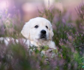 White dog in the flowers Stock Photo 06