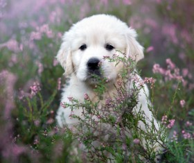 White dog in the flowers Stock Photo 07