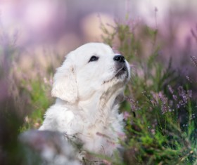 White dog in the flowers Stock Photo 08