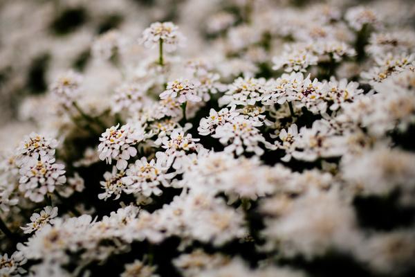 beautiful fresh blossom white flowers Stock Photo