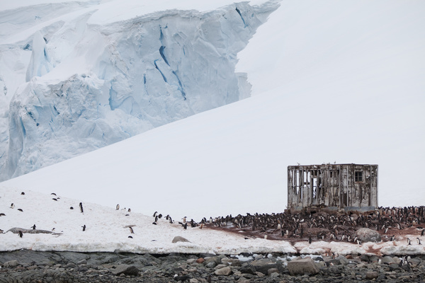 crowded penguin on the snowfield Stock Photo
