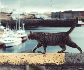 grey cat walking on quay Stock Photo