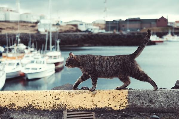 grey cat walking on quay Stock Photo