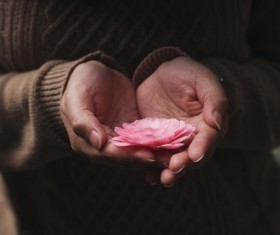 hands holding delicate flower Stock Photo