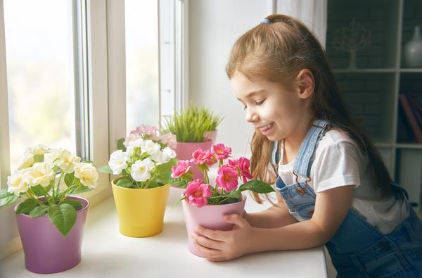 little girl looks at the flowers on the windowsill Stock Photo