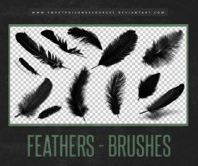 12 Feather Photoshop Brushes