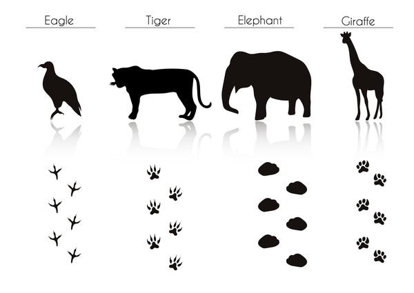 animals with footprint silhouette vector material 11 free