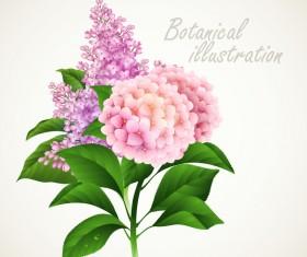 Botanical flower illustration vector