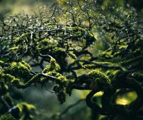 Closeup mossy leafless tree Stock Photo