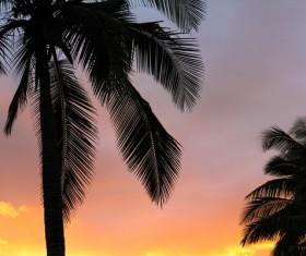 Coconut trees at dark sunset Stock Photo