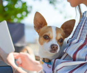 Cute small dog and owner Stock Photo