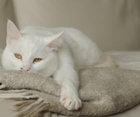 Cute white kitten Stock Photo 01