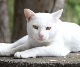 Cute white kitten Stock Photo 02