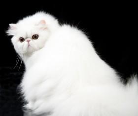Cute white kitten Stock Photo 03