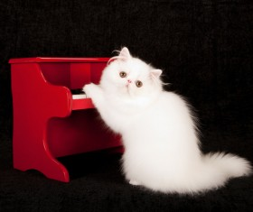 Cute white kitten Stock Photo 04