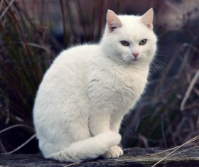 Cute white kitten Stock Photo 05