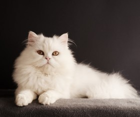 Cute white kitten Stock Photo 06