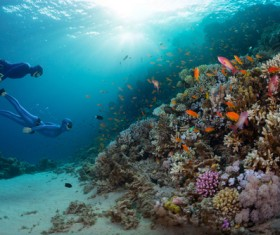 Diver with beautiful underwater world Stock Photo 01