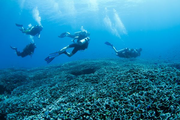 Diver with beautiful underwater world Stock Photo 04